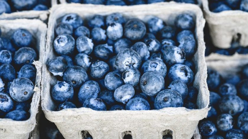 Blueberries for Artery Function