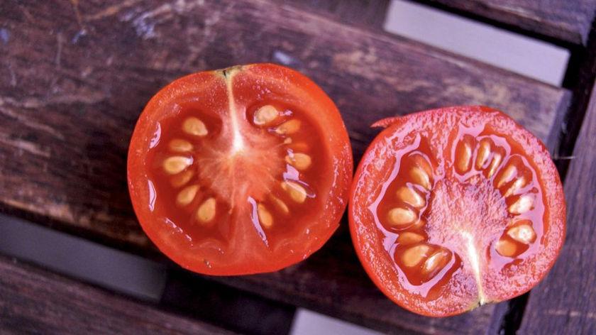 fresh tomato halves