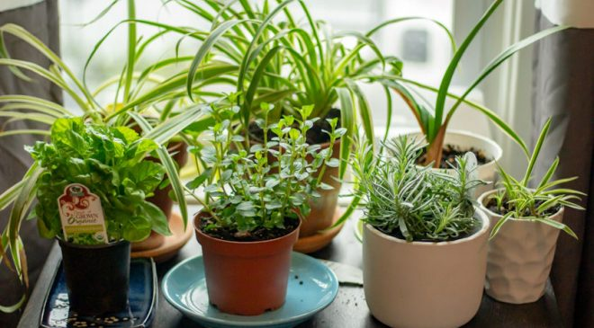 Creating the Perfect Herb Garden at Home this April